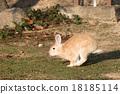 Okunojima兔子 18185114