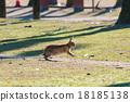 Okunojima兔子 18185138