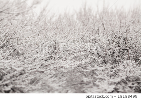 ฤดูหนาวหิมะที่จมอยู่ในต้นไม้ 18188499