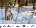 雪 冬天 冬 18190551