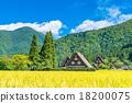 白川乡 稻田 茅草屋顶的村落 18200075