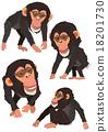 黑猩猩 申年 猴 18201730