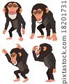 黑猩猩 申年 猴 18201731