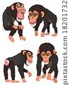 黑猩猩 申年 猴 18201732