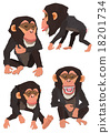 黑猩猩 申年 猴 18201734