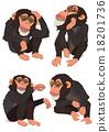 黑猩猩 申年 猴 18201736