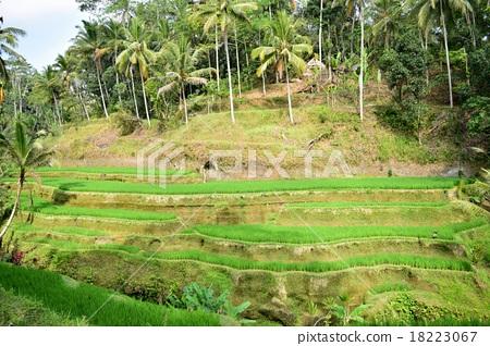 Rice terrace 18223067