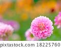 植物 開花 花卉 18225760
