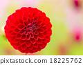植物 開花 花卉 18225762