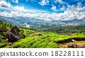 tea, plantations, green 18228111