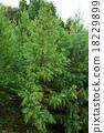树 树木 木头 18229899
