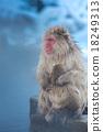 猴子 动物 猭 18249313