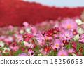 꽃잎, 식물, 꽃 18256653
