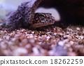 生物 活的东西 爬行动物 18262259