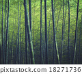 Bamboo Forest Trees Nature Concept 18271736