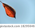leaves of autumn 18295646