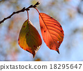 leaves of autumn 18295647