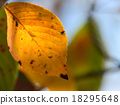 leaves of autumn 18295648