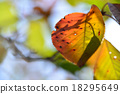 leaves of autumn 18295649