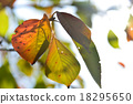 leaves of autumn 18295650
