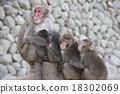 一隻猴子 18302069