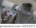 一隻猴子 18302072
