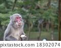 一隻猴子 18302074