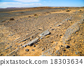 old fossil in  the desert of  stone sky 18303634
