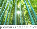 竹叢 陽光 透過樹葉的陽光 18307120