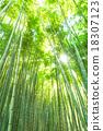 竹叢 透過樹葉的陽光 竹 18307123