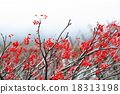 Red fruit tree 18313198