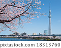 스카이트리, 도쿄 스카이트리, 벚꽃 18313760