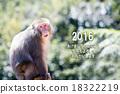 monkey, monkeys, the 18322219