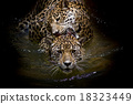 close up Jaguar Portrait 18323449