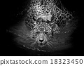 close up Jaguar Portrait 18323450