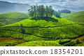 tea, plantations, green 18354201