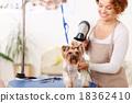 dog, hairstyle, hairdryer 18362410