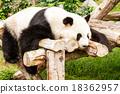 Panda. 18362957