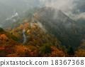 楓樹 山脊 紅楓 18367368