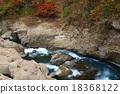 Shirami河秋叶 18368122