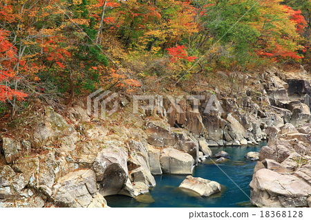 Shirami河秋叶 18368128