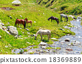 Horse herd on the pasture in the mountains 18369889