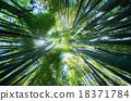 竹叢 透過樹葉的陽光 竹 18371784