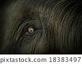 elephant'eye 18383497