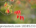 goby, wax, tree 18385233