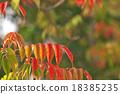 goby, wax, tree 18385235