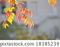 goby, wax, tree 18385239