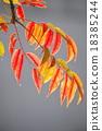 goby, wax, tree 18385244
