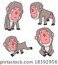 japanese, monkey, monkeys 18392956