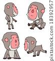 japanese, monkey, monkeys 18392957